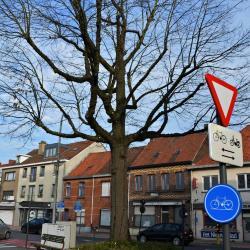 Vrijheidsboom van Petegem-aan-de-Leie