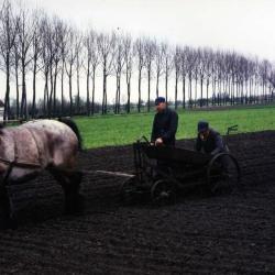 Aardappelen uit Zevergemse grond