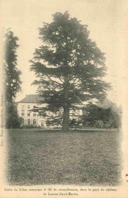 Een prachtige Libanonceder in het park van het kasteel van Crombrugghe