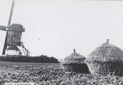De Kapellemolen van Zulte