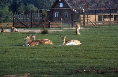 Dierenpark in De Brielmeersen