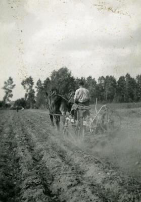 De aardappelrooier