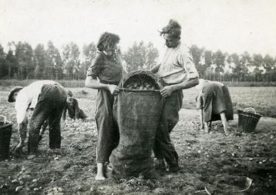 De aardappelen worden in jutezakken gegoten