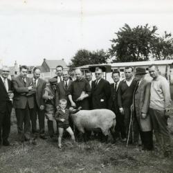 Provinciale schapenwedstrijd in Semmerzake