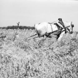 Het 'paard van Sinterklaas' aan het werk