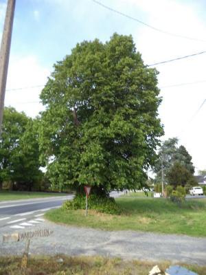 De Gheraerdsboom