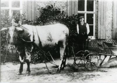 Viktor Biebuyck poseert met koe en ploeg