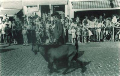 Geiten in de Canteclaerstoet, Deinze, 1975