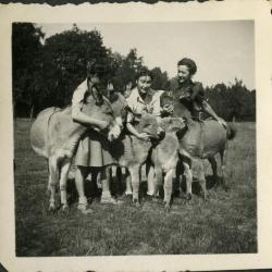 De ezels van de familie Gevaert-Minne