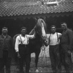 Werkpaard D'Haenens