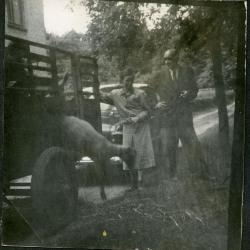Verwelkoming van de schapen bij de familie Gevaert