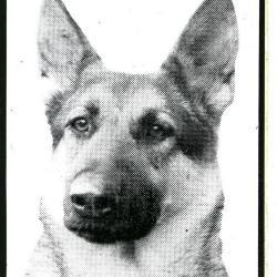 Hondenafrichtingsclub WAAK en ZIE